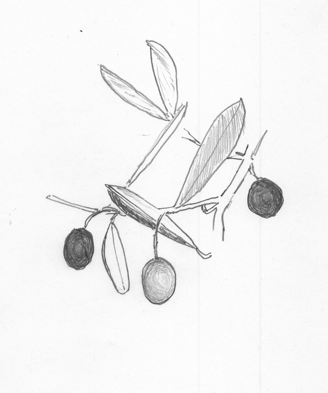 Olives for blog